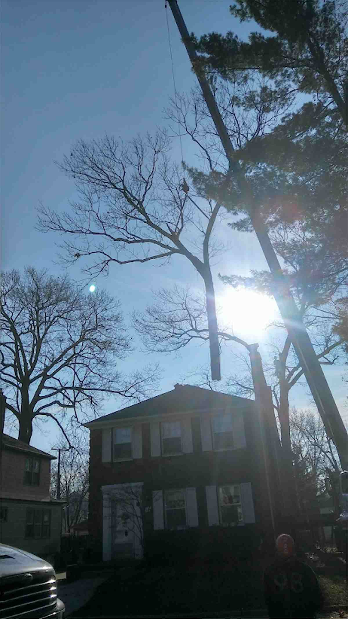 Crane Removal from Tree Service of Troy, Michigan