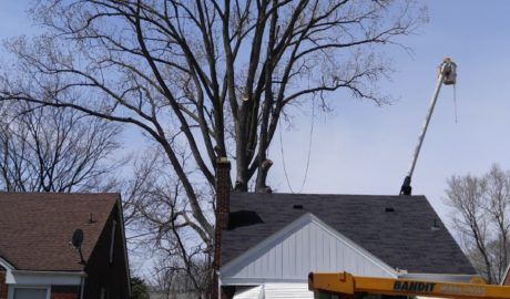 Michigan Tree Removal Services from Tree Service of Troy
