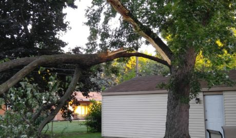Michigan Storm Damage and Cleanup Tree Services from Tree Service of Troy