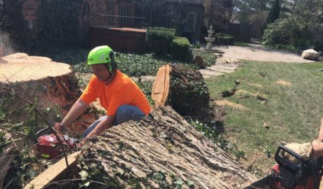 Tree Service of Troy Worker Removing Stump