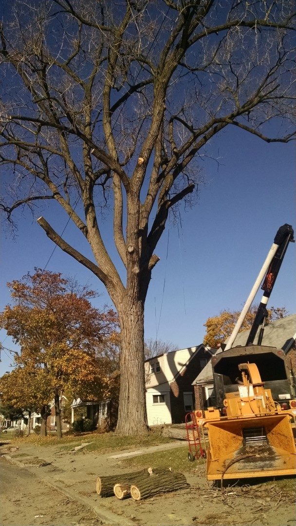 https://treeserviceoftroy.com/wp-content/uploads/2018/12/tree-service-of-troy-24-e1546155135994.jpg