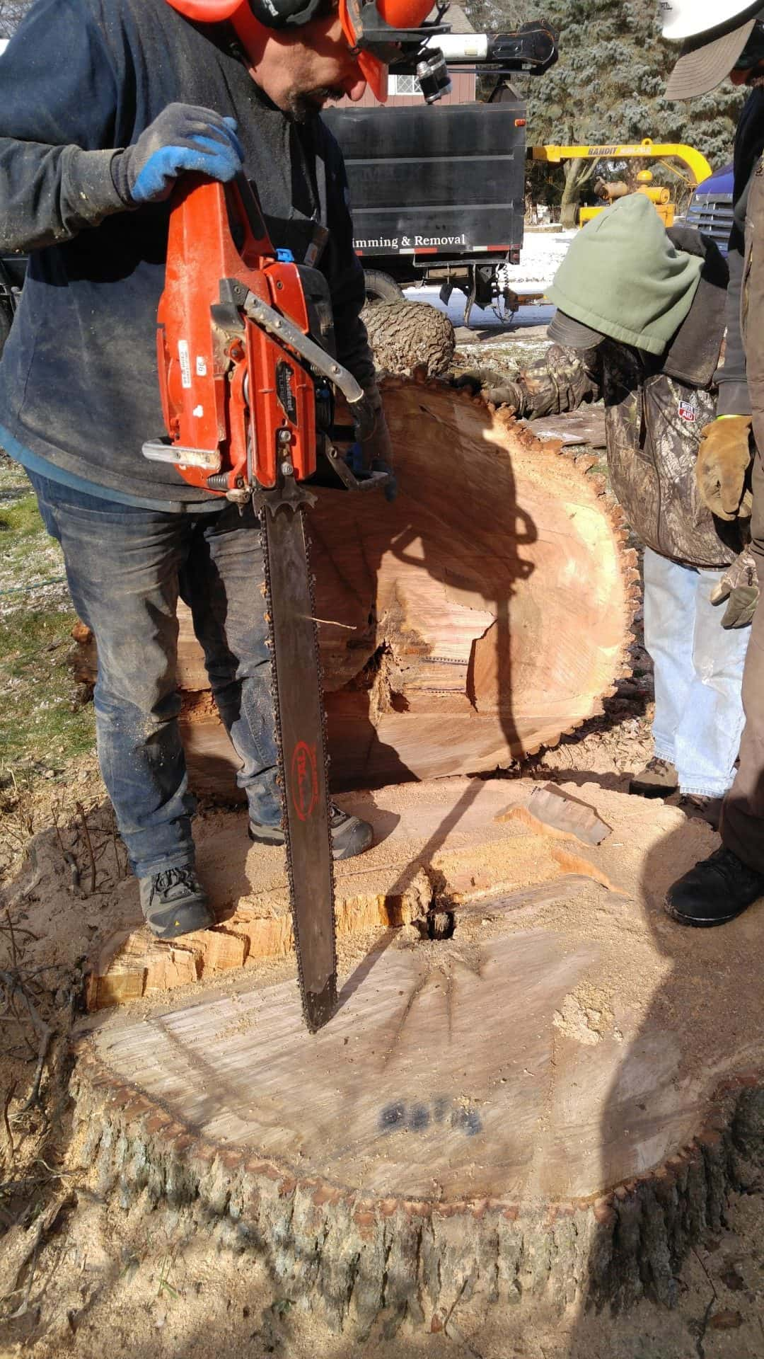 Michigan Stump Removal Services from Tree Service of Troy
